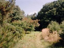 Botanischer Garten in Tata-Agostyán Tata