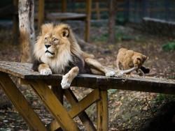 Zoopark - Nyíregyháza Nyíregyháza