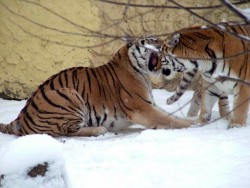 Xantus Janos Zoo - Győr Györ